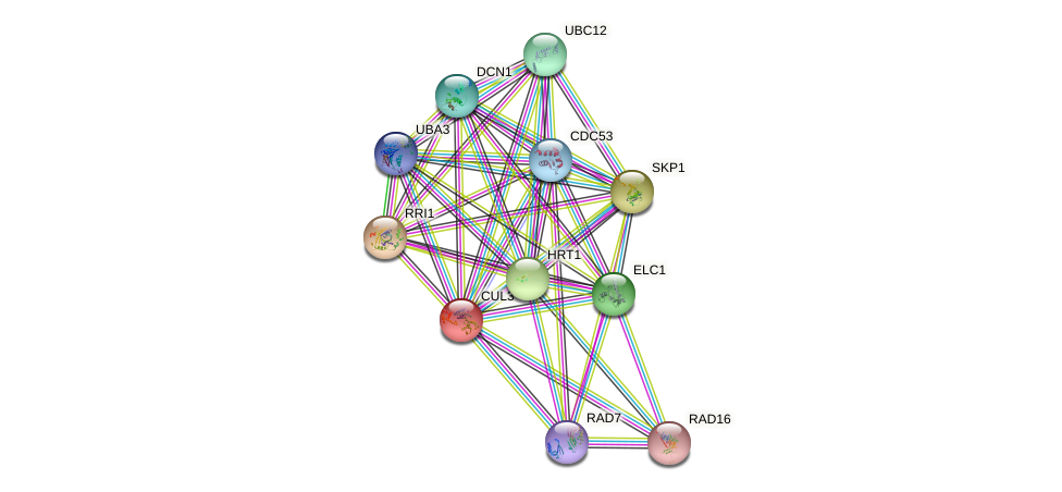 CUL3 protein (Saccharomyces cerevisiae) - STRING interaction network