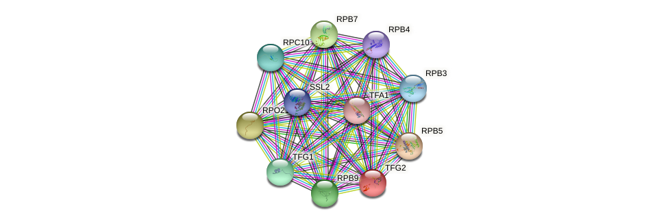TFG2 protein (Saccharomyces cerevisiae) - STRING interaction network