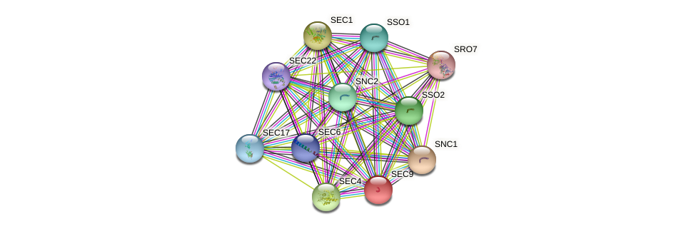 SEC9 protein (Saccharomyces cerevisiae) - STRING interaction network