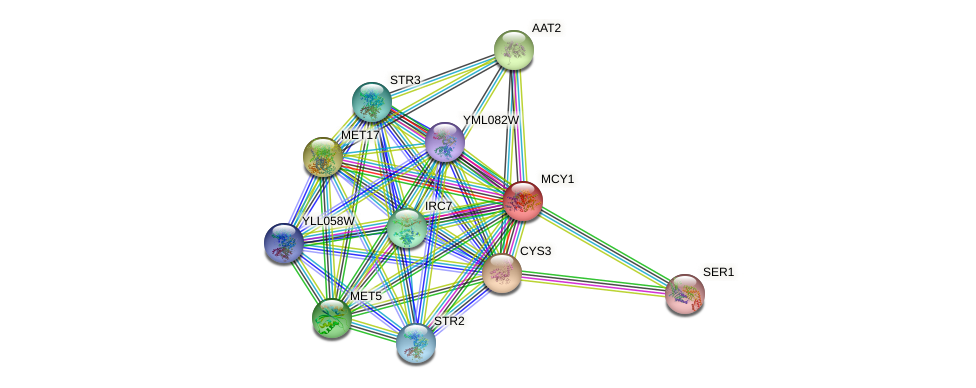 MCY1 protein (Saccharomyces cerevisiae) - STRING interaction network
