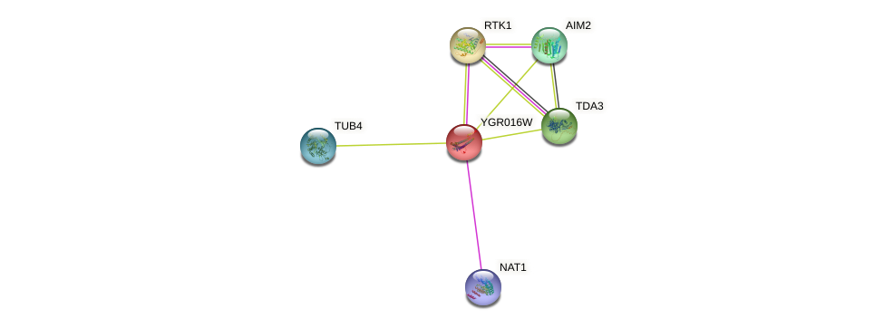 YGR016W protein (Saccharomyces cerevisiae) - STRING interaction network