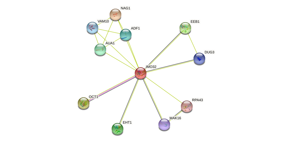 IMO32 protein (Saccharomyces cerevisiae) - STRING interaction network