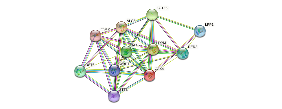 CAX4 protein (Saccharomyces cerevisiae) - STRING interaction network