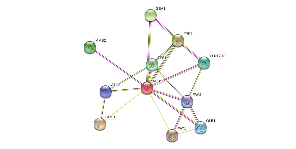 ACB1 protein (Saccharomyces cerevisiae) - STRING interaction network