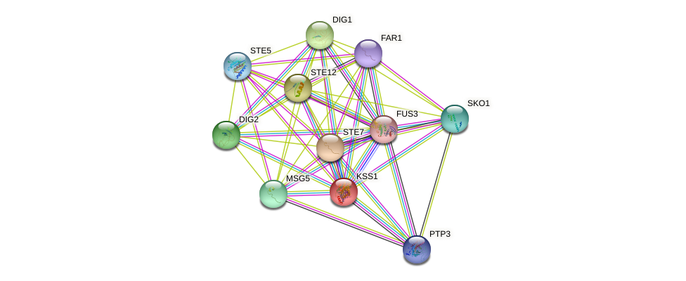 KSS1 protein (Saccharomyces cerevisiae) - STRING interaction network