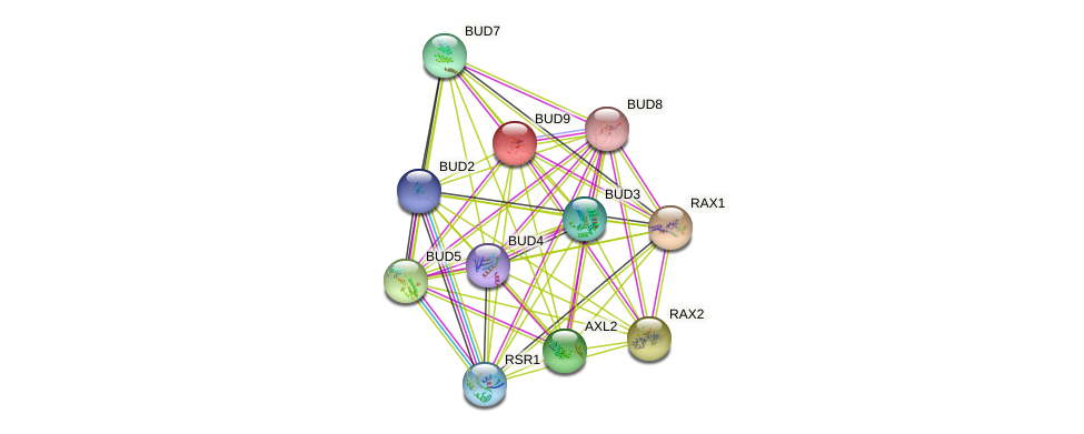 BUD9 protein (Saccharomyces cerevisiae) - STRING interaction network