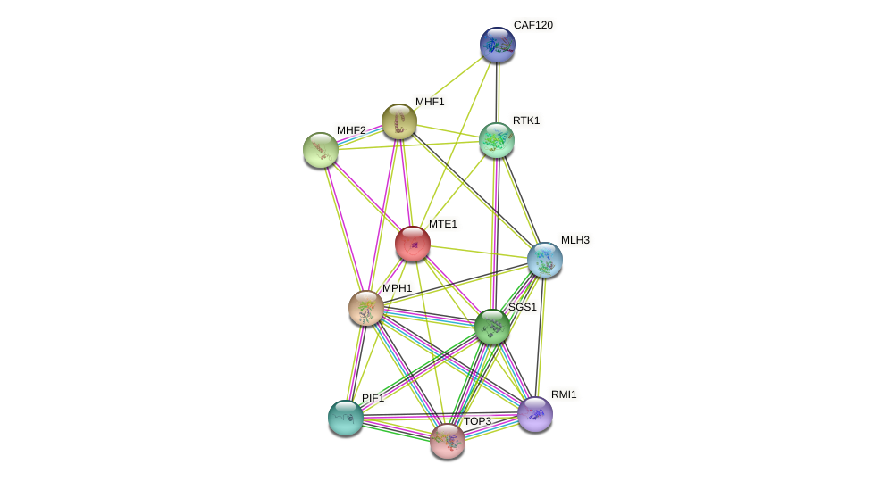 MTE1 protein (Saccharomyces cerevisiae) - STRING interaction network