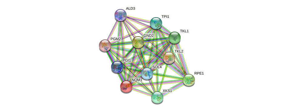 NQM1 protein (Saccharomyces cerevisiae) - STRING interaction network