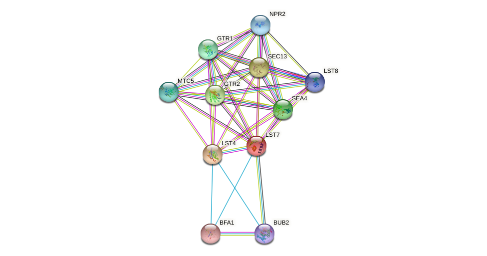 LST7 protein (Saccharomyces cerevisiae) - STRING interaction network