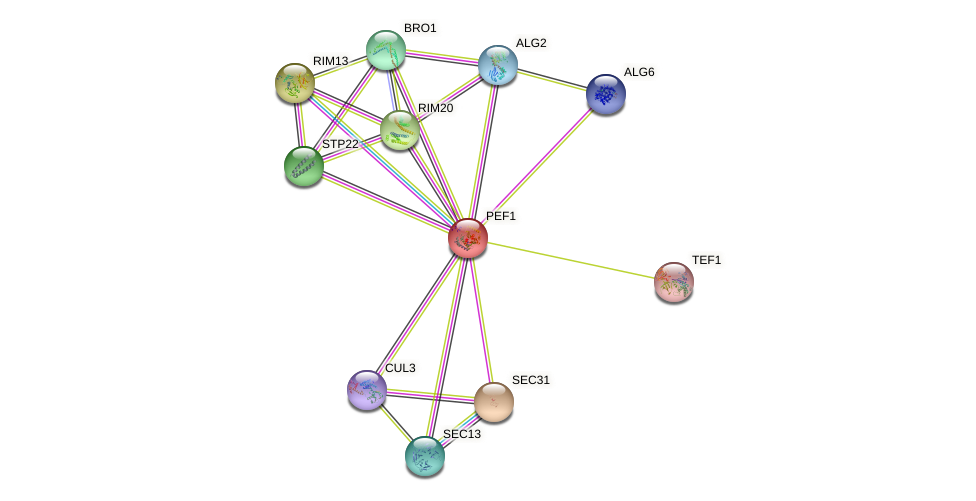 PEF1 protein (Saccharomyces cerevisiae) - STRING interaction network