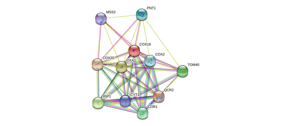 COX18 protein (Saccharomyces cerevisiae) - STRING interaction network