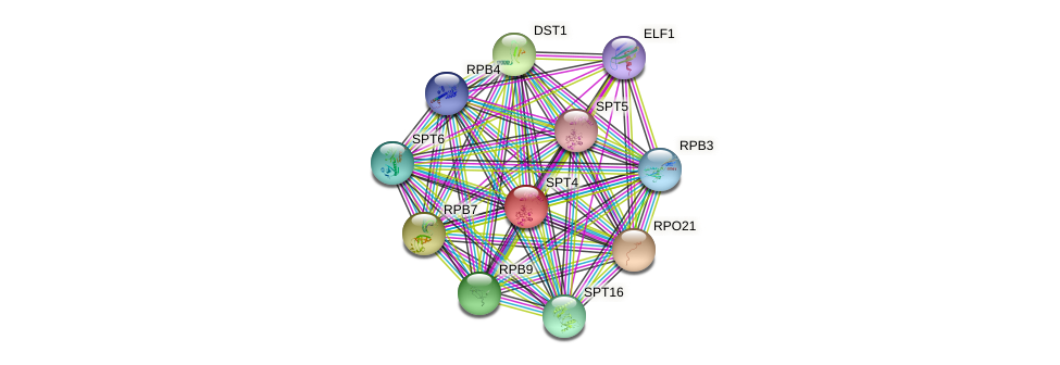 SPT4 protein (Saccharomyces cerevisiae) - STRING interaction network
