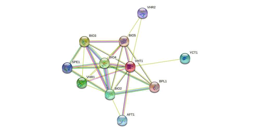 VHT1 protein (Saccharomyces cerevisiae) - STRING interaction network