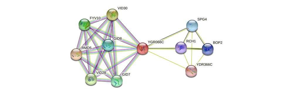 YGR066C protein (Saccharomyces cerevisiae) - STRING interaction network
