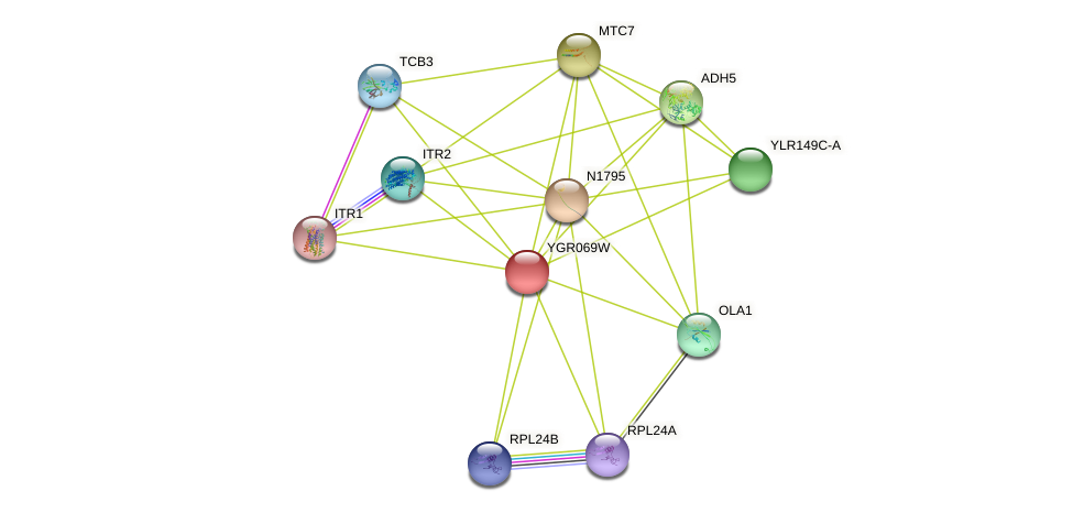 YGR069W protein (Saccharomyces cerevisiae) - STRING interaction network