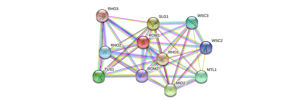 ROM1 protein (Saccharomyces cerevisiae) - STRING interaction network