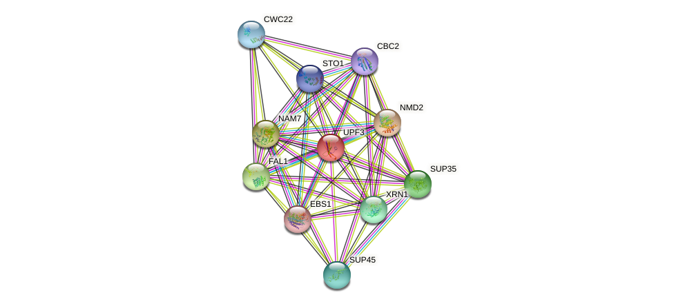 UPF3 protein (Saccharomyces cerevisiae) - STRING interaction network