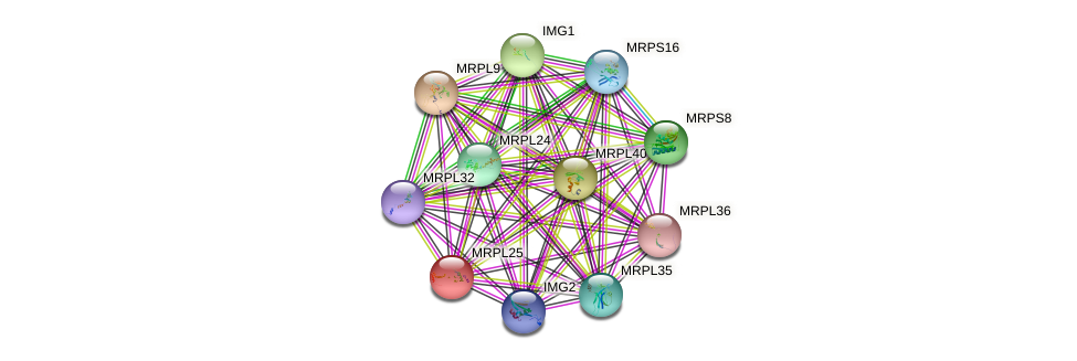 MRPL25 protein (Saccharomyces cerevisiae) - STRING interaction network
