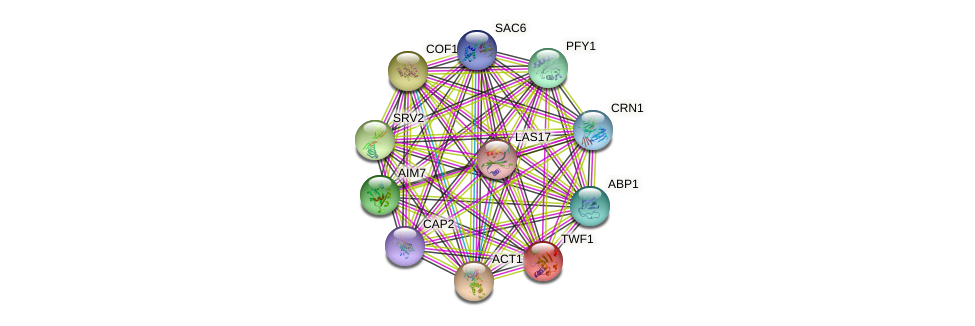 TWF1 protein (Saccharomyces cerevisiae) - STRING interaction network
