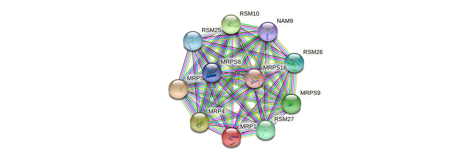MRP13 protein (Saccharomyces cerevisiae) - STRING interaction network