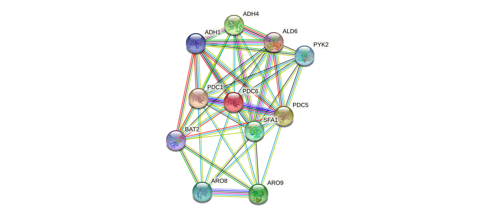 PDC6 protein (Saccharomyces cerevisiae) - STRING interaction network