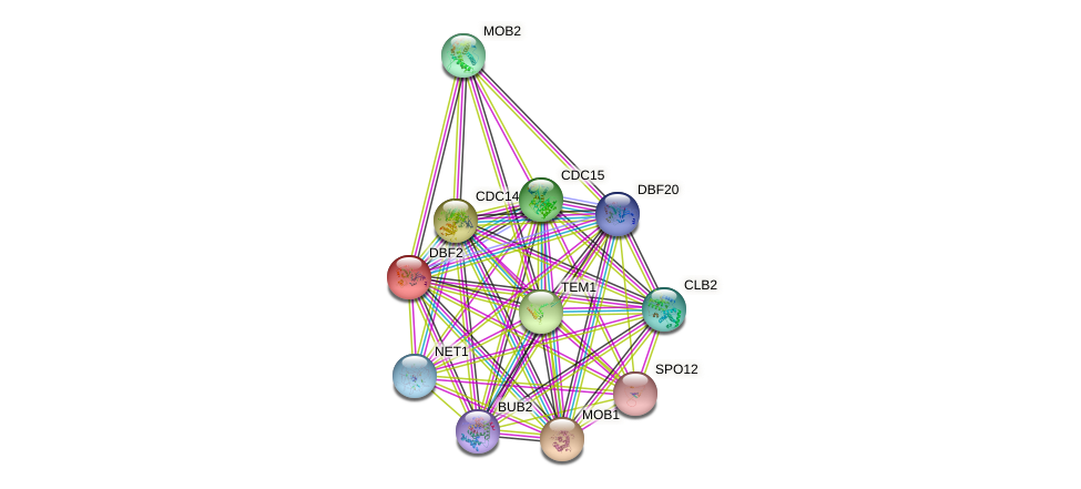 DBF2 protein (Saccharomyces cerevisiae) - STRING interaction network