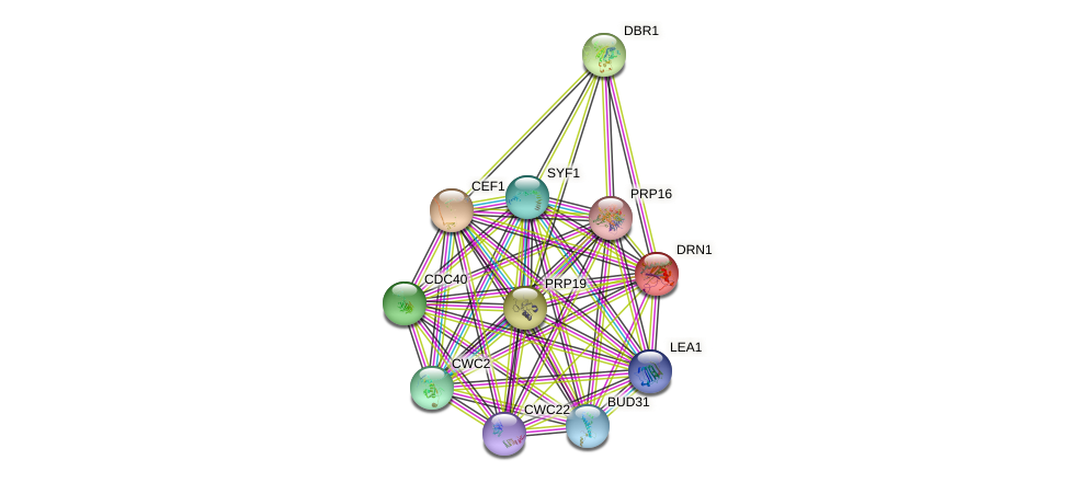 DRN1 protein (Saccharomyces cerevisiae) - STRING interaction network