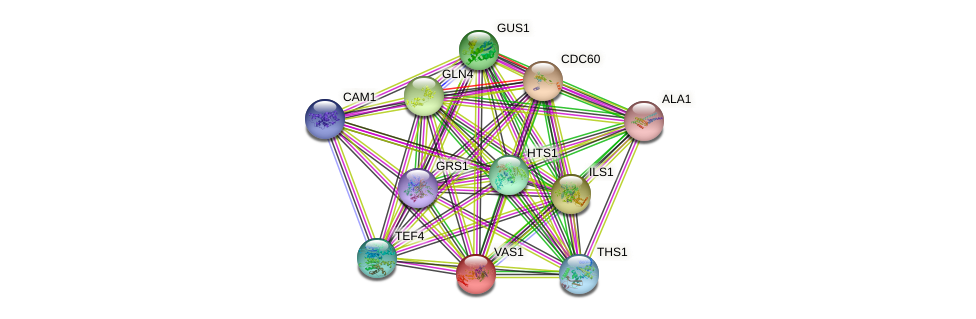 VAS1 protein (Saccharomyces cerevisiae) - STRING interaction network