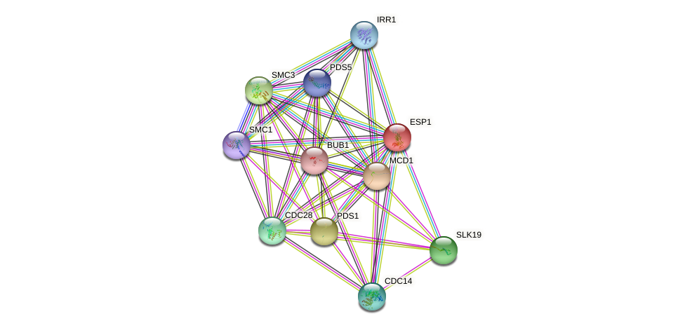 ESP1 protein (Saccharomyces cerevisiae) - STRING interaction network