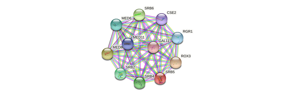 SRB5 protein (Saccharomyces cerevisiae) - STRING interaction network
