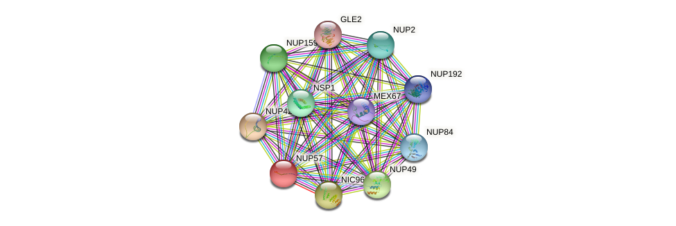 NUP57 protein (Saccharomyces cerevisiae) - STRING interaction network