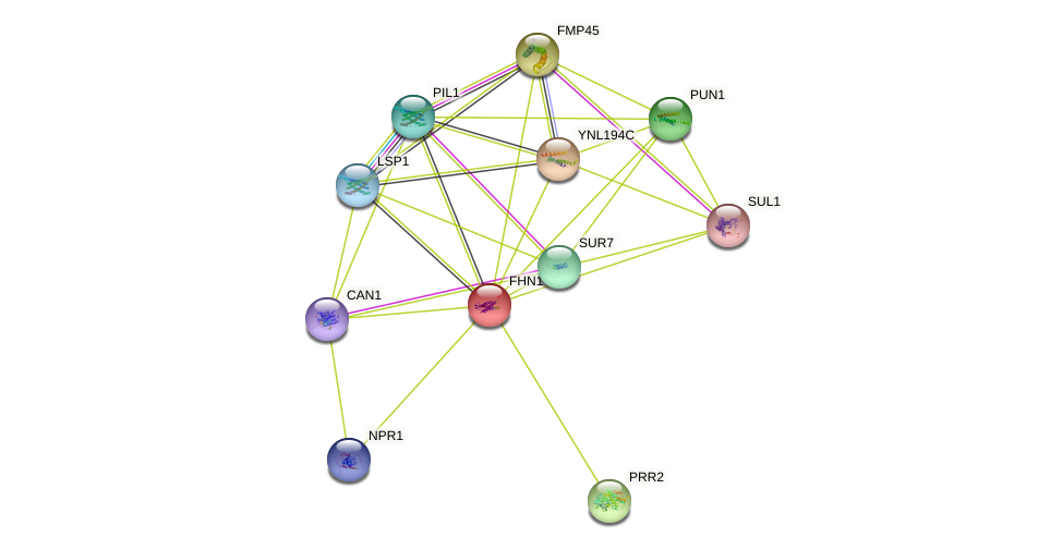 FHN1 protein (Saccharomyces cerevisiae) - STRING interaction network