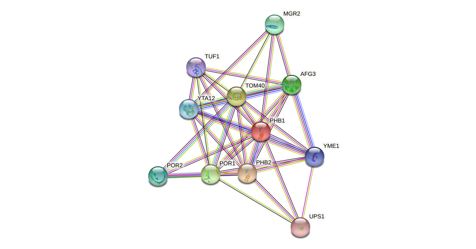 PHB1 protein (Saccharomyces cerevisiae) - STRING interaction network