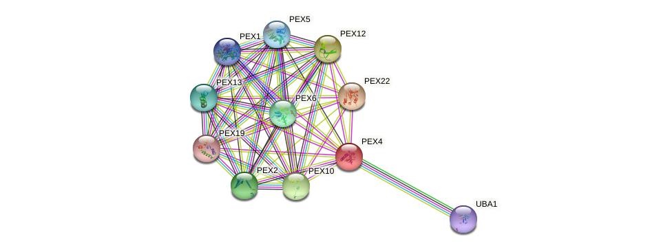 PEX4 protein (Saccharomyces cerevisiae) - STRING interaction network