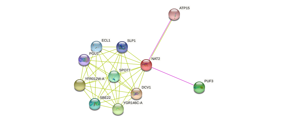 NAT2 protein (Saccharomyces cerevisiae) - STRING interaction network