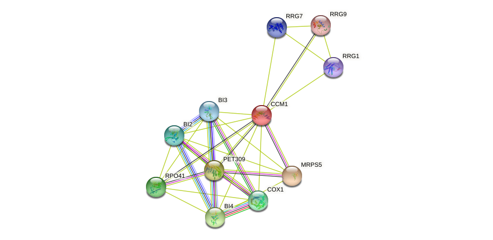 CCM1 protein (Saccharomyces cerevisiae) - STRING interaction network