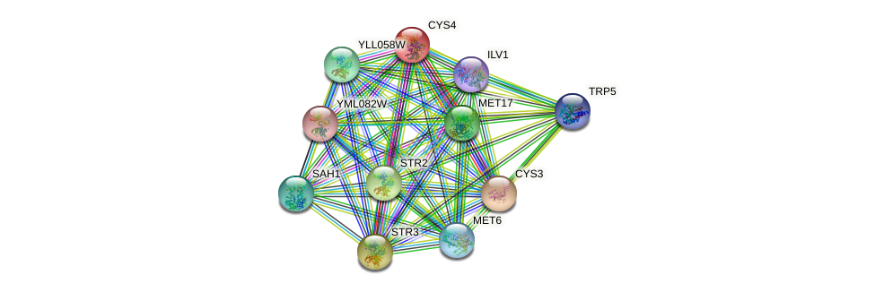 CYS4 protein (Saccharomyces cerevisiae) - STRING interaction network