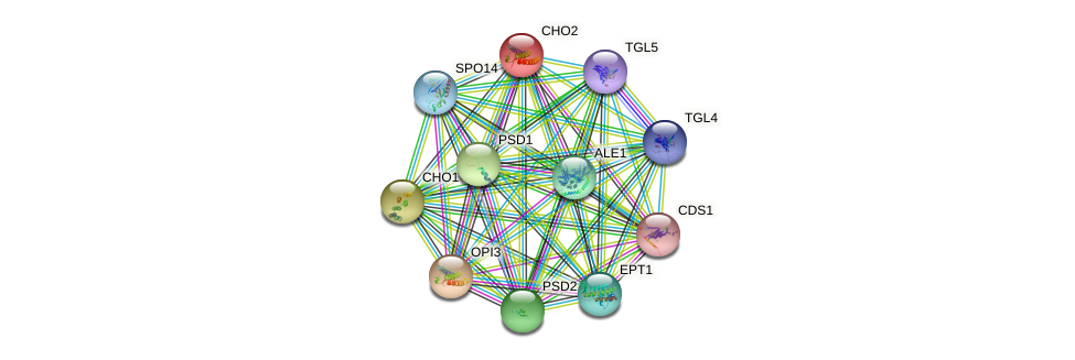 CHO2 protein (Saccharomyces cerevisiae) - STRING interaction network