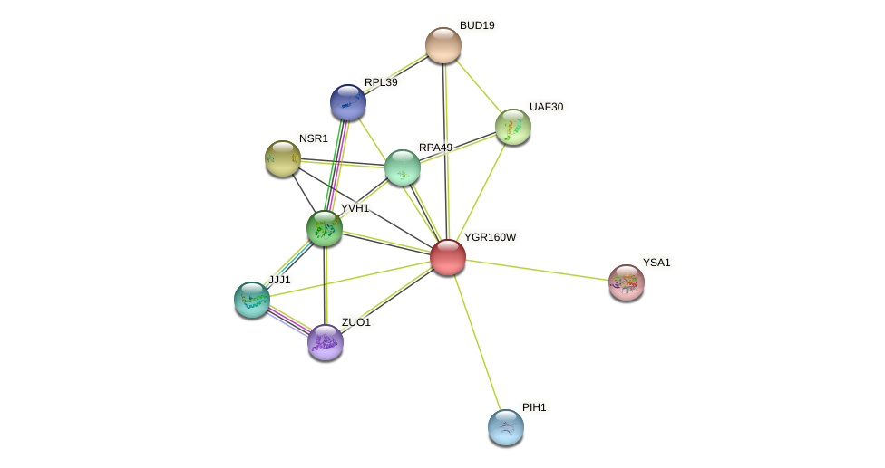 YGR160W protein (Saccharomyces cerevisiae) - STRING interaction network