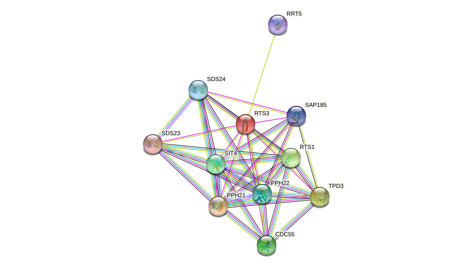 RTS3 protein (Saccharomyces cerevisiae) - STRING interaction network