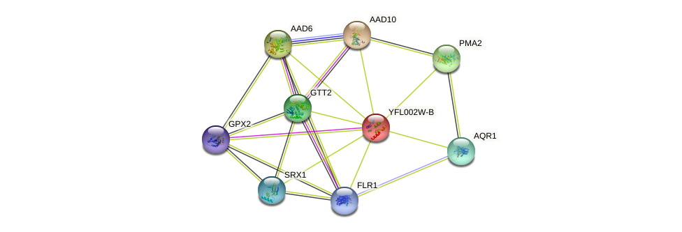 YFL002W-B protein (Saccharomyces cerevisiae) - STRING interaction network