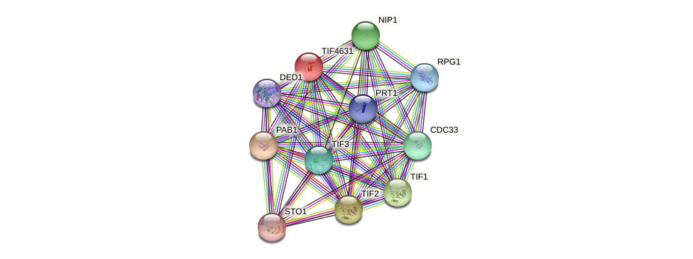 TIF4631 protein (Saccharomyces cerevisiae) - STRING interaction network