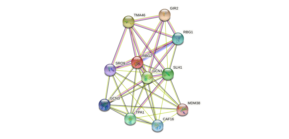 RBG2 protein (Saccharomyces cerevisiae) - STRING interaction network