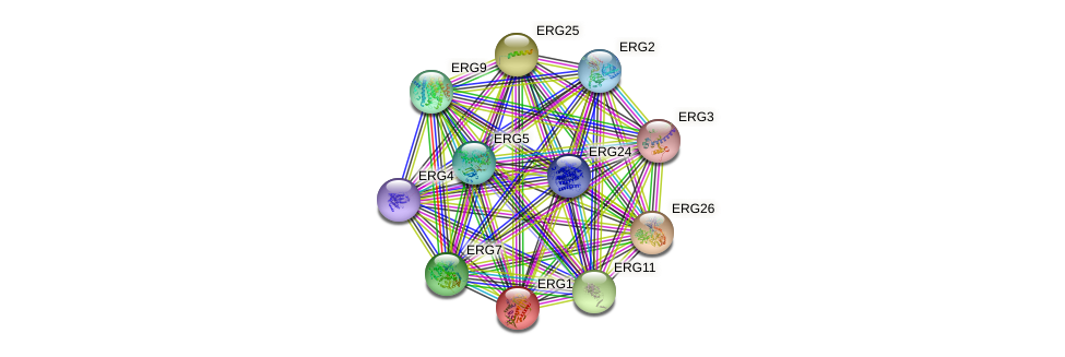 ERG1 protein (Saccharomyces cerevisiae) - STRING interaction network