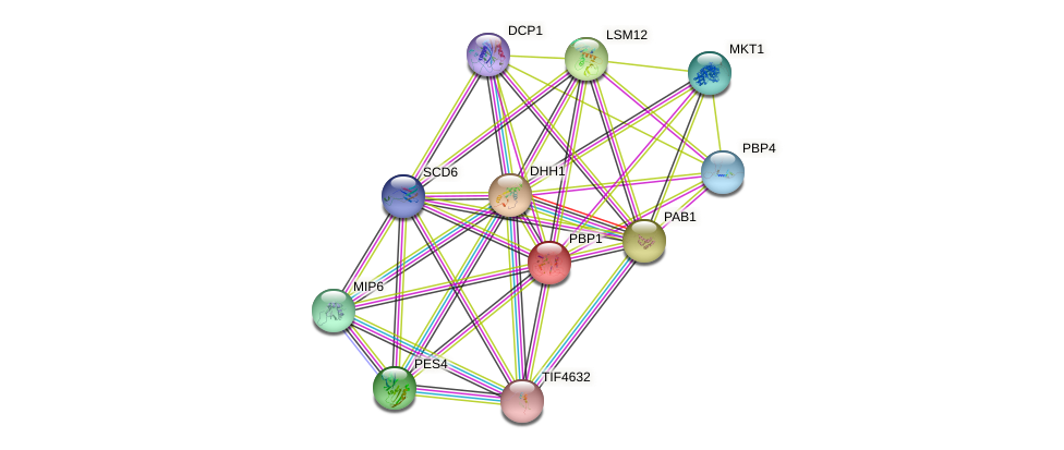 PBP1 protein (Saccharomyces cerevisiae) - STRING interaction network