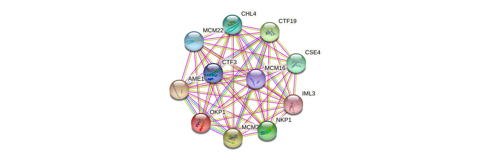 OKP1 protein (Saccharomyces cerevisiae) - STRING interaction network