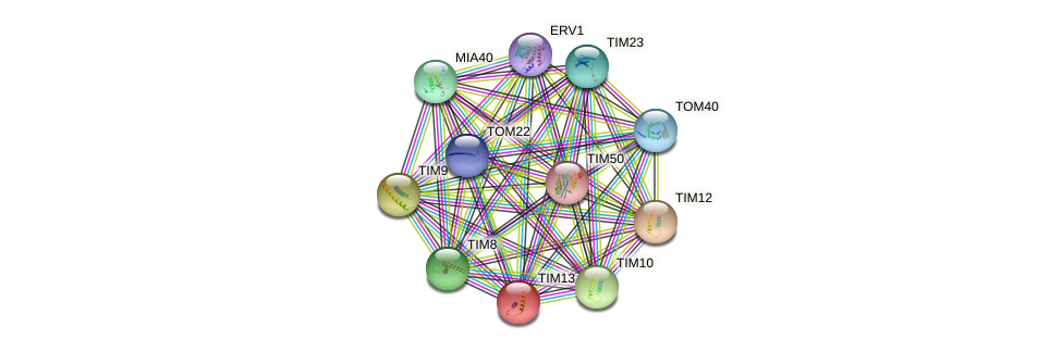 TIM13 protein (Saccharomyces cerevisiae) - STRING interaction network