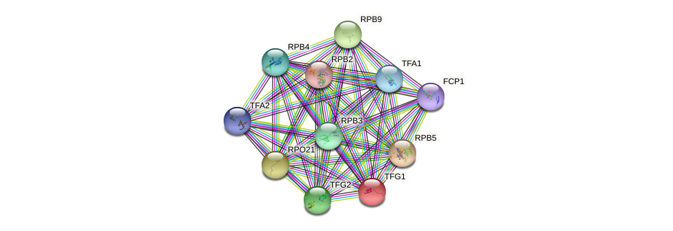 TFG1 protein (Saccharomyces cerevisiae) - STRING interaction network