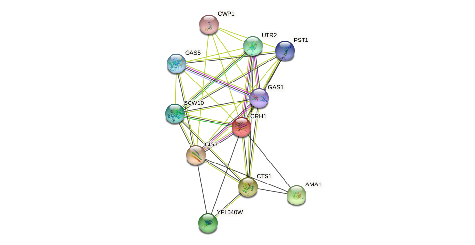 CRH1 protein (Saccharomyces cerevisiae) - STRING interaction network