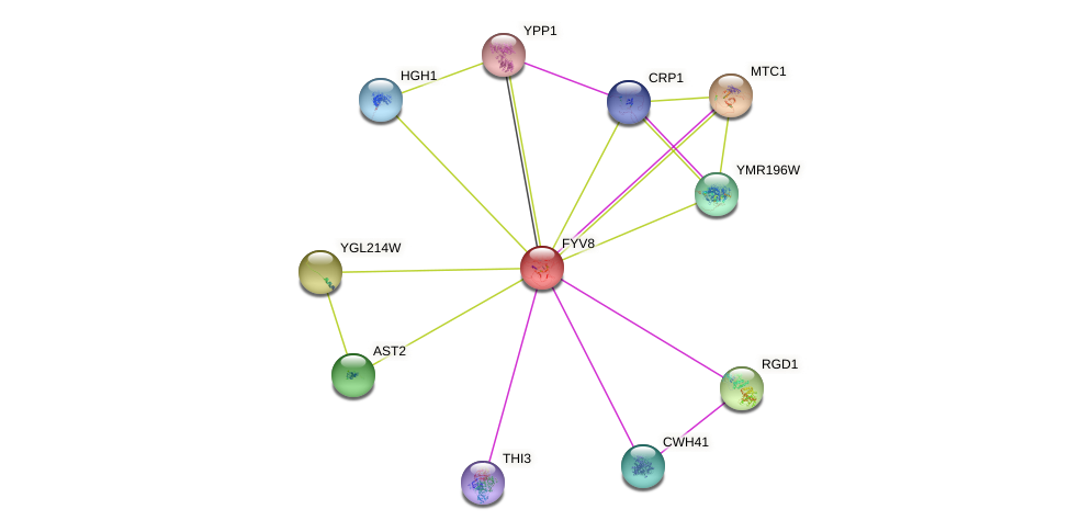 FYV8 protein (Saccharomyces cerevisiae) - STRING interaction network